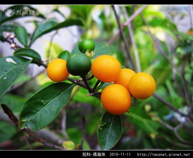 茄科-瑪瑙珠_04.jpg