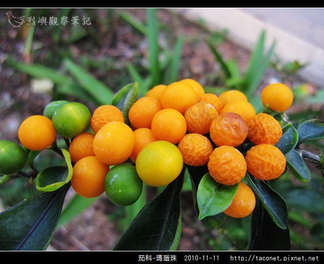 茄科-瑪瑙珠_05.jpg