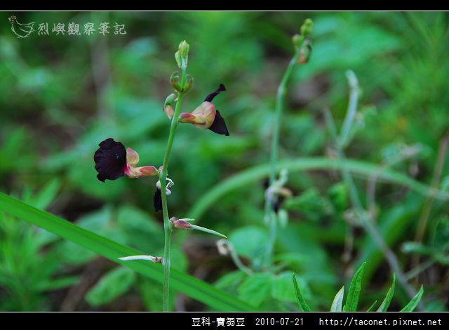 豆科-賽芻豆_01.jpg