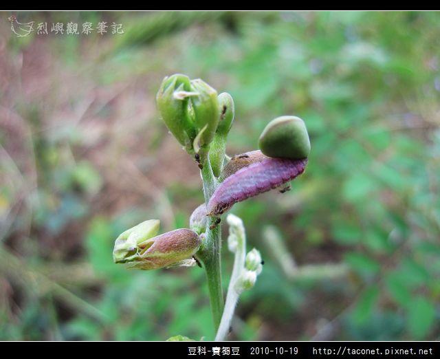 豆科-賽芻豆_05.jpg