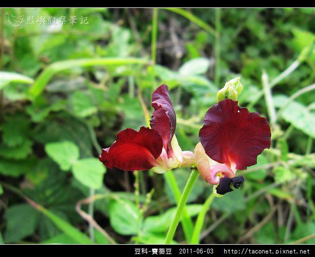 豆科-賽芻豆_09.jpg
