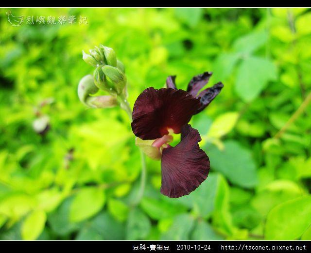 豆科-賽芻豆_08.jpg