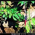霜白蜻蜓_01.jpg