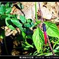 霜白蜻蜓_03.jpg