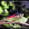 霜白蜻蜓_05.jpg