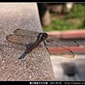 霜白蜻蜓_06.jpg