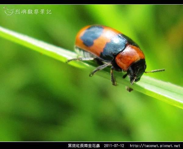 黑斑紅長筒金花蟲_04.jpg