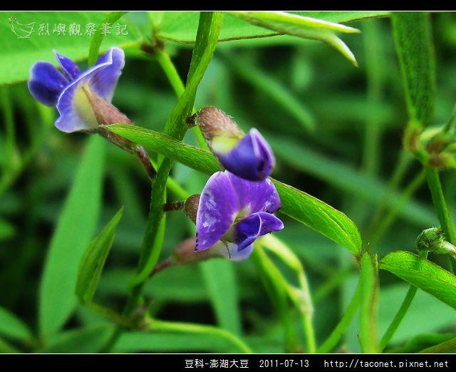 豆科-澎湖大豆_02.jpg