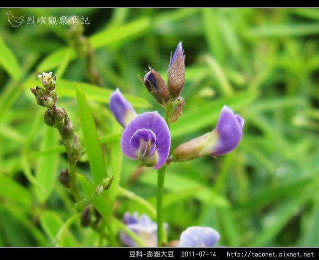豆科-澎湖大豆_08.jpg