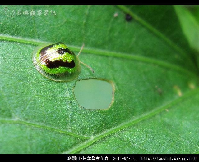 鞘翅目-甘藷龜金花蟲_03.jpg