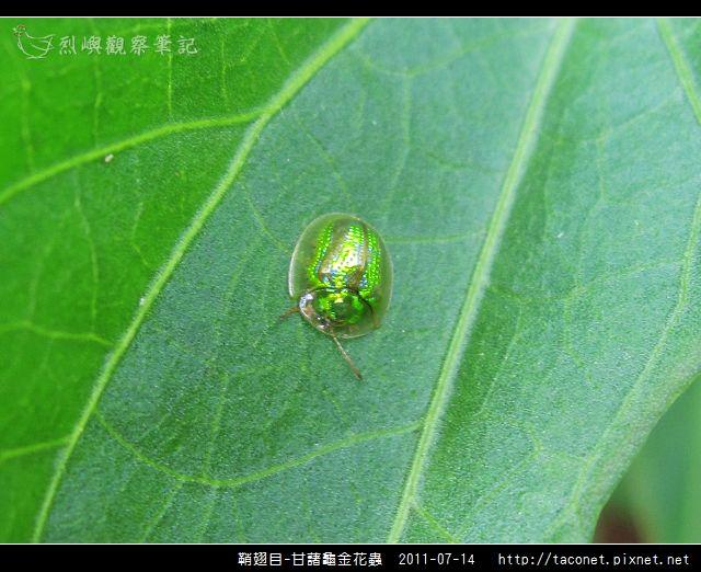 鞘翅目-甘藷龜金花蟲_05.jpg
