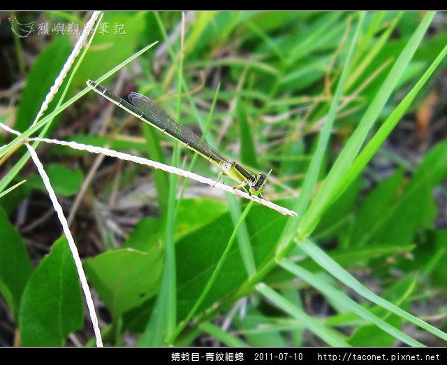 蜻蛉目-青紋細蟌_566.jpg