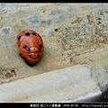 鞘翅目-茄二十八星瓢蟲_01.jpg