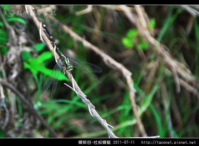 蜻蛉目-杜松蜻蜓_02.jpg
