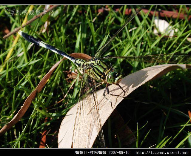 蜻蛉目-杜松蜻蜓_08.jpg