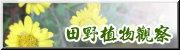田野植物觀察