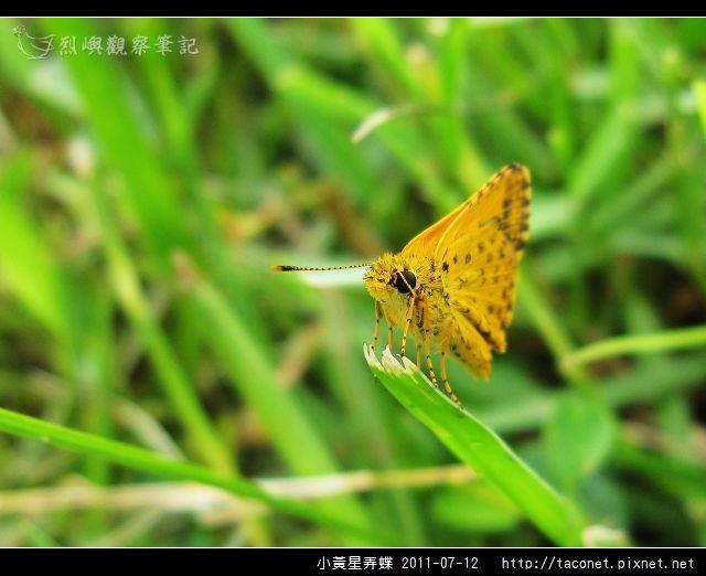 小黃星弄蝶_01.jpg
