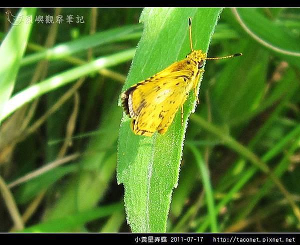 小黃星弄蝶_03.jpg