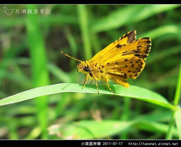 小黃星弄蝶_09.jpg