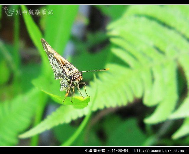 小黃星弄蝶_12.jpg