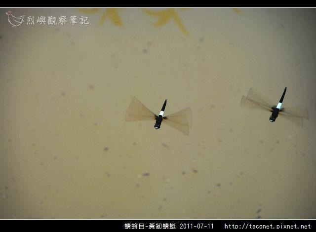 蜻蛉目-黃紉蜻蜓_01.jpg