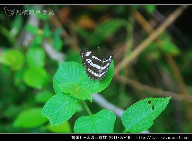 鱗翅目-琉球三線蝶_02.jpg