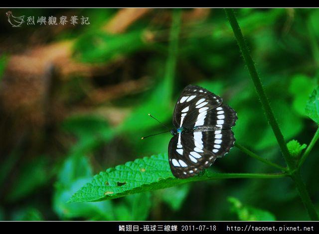 鱗翅目-琉球三線蝶_05.jpg