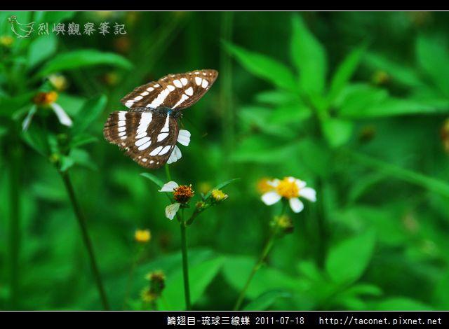 鱗翅目-琉球三線蝶_07.jpg