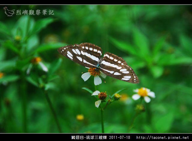 鱗翅目-琉球三線蝶_10.jpg