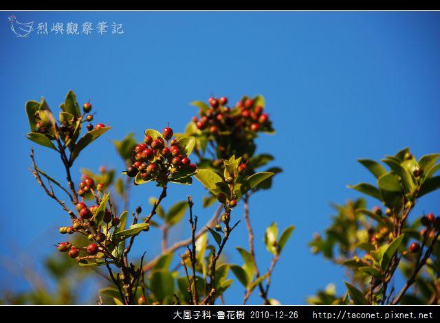 大風子科-魯花樹-06.jpg