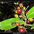 大風子科-魯花樹-08.jpg