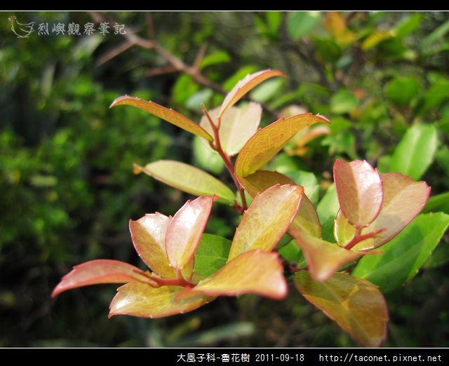 大風子科-魯花樹-11.jpg