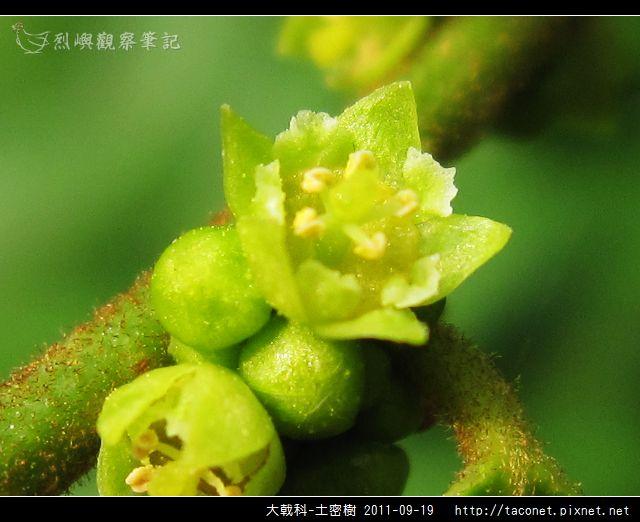 大戟科-土密樹_06.jpg