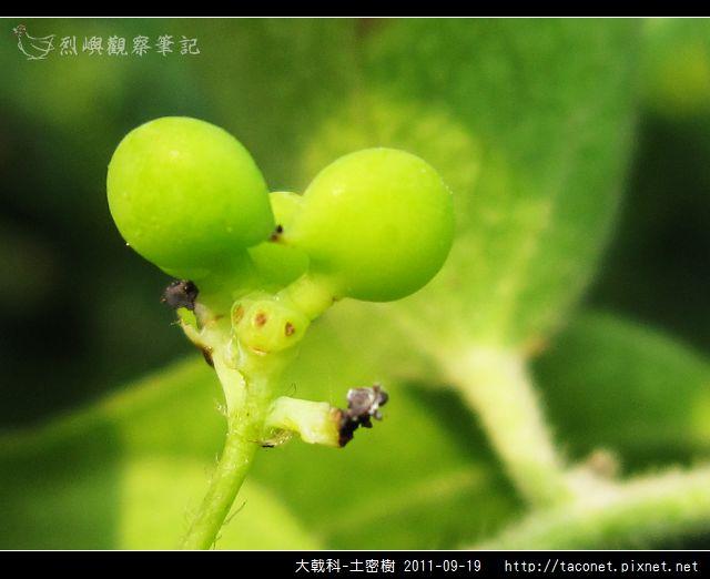 大戟科-土密樹_09.jpg