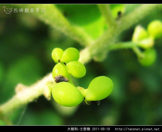 大戟科-土密樹_10.jpg