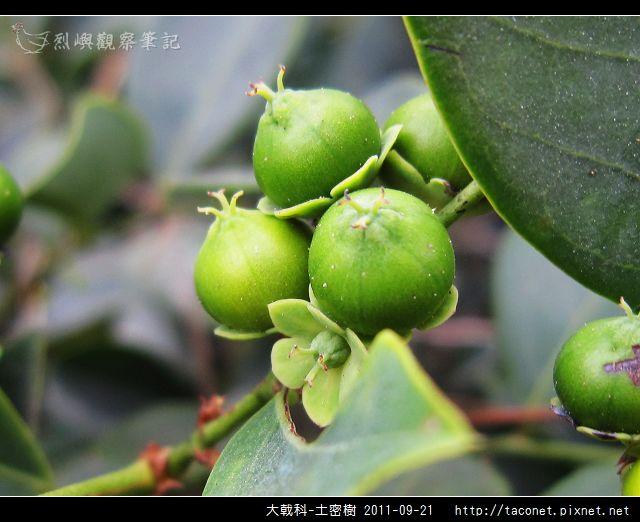 大戟科-土密樹_15.jpg