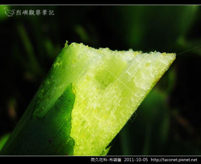雨久花科-布袋蓮_14.jpg