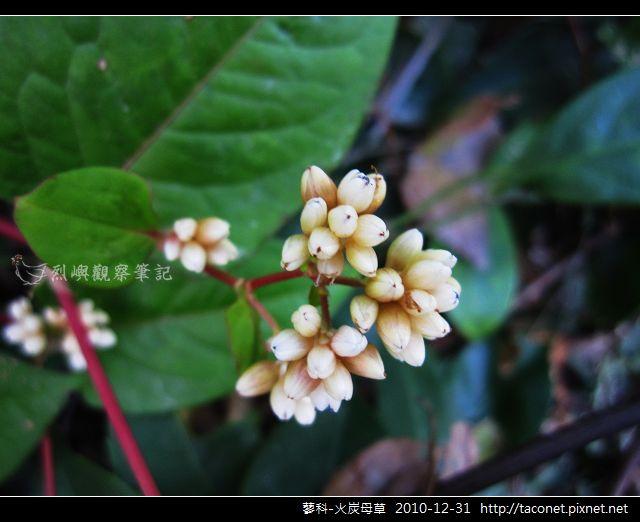 蓼科-火炭母草_08.jpg