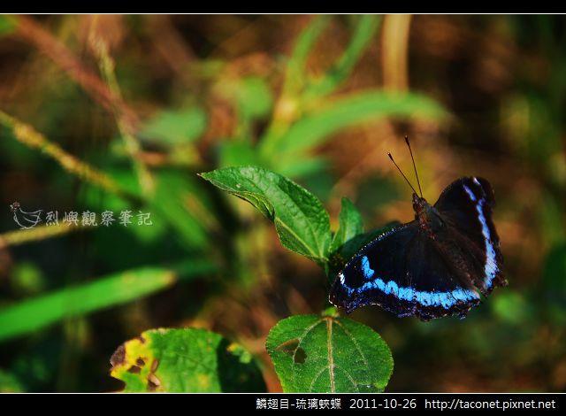 鱗翅目-琉璃蛺蝶_05.jpg