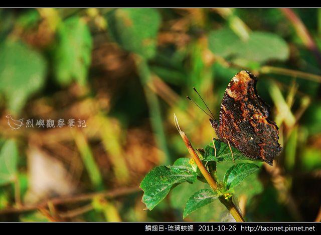 鱗翅目-琉璃蛺蝶_08.jpg