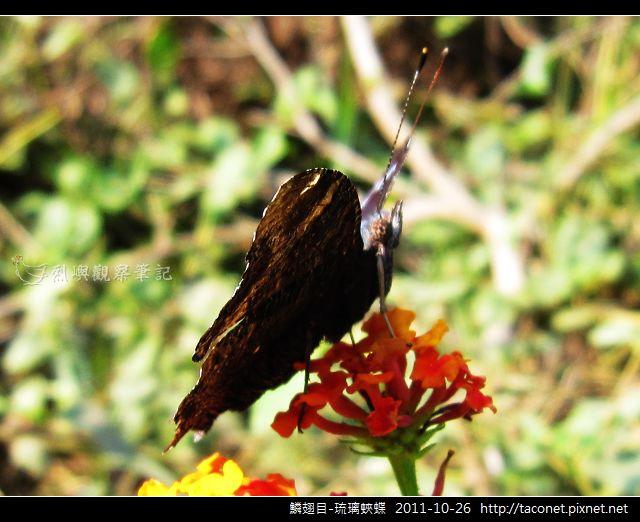 鱗翅目-琉璃蛺蝶_13.jpg