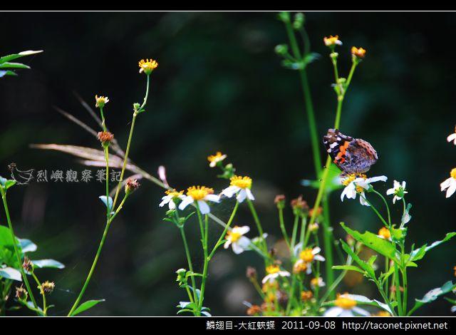 鱗翅目-大紅蛺蝶_05.jpg