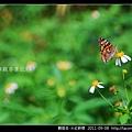 鱗翅目-大紅蛺蝶_10.jpg