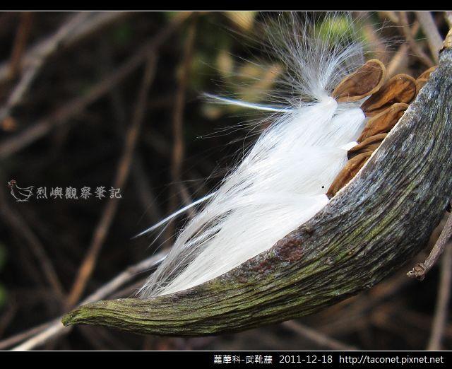 蘿藦科-武靴藤_12.jpg