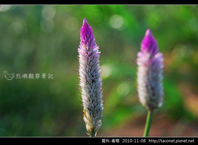 莧科-青葙_02.jpg