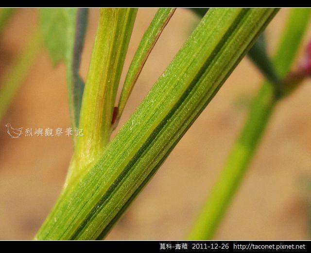 莧科-青葙_16.jpg