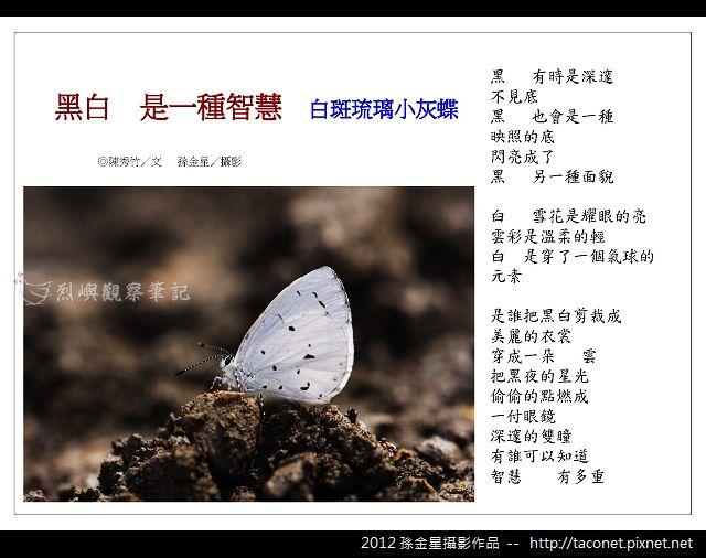 孫金星攝影作品_06.jpg