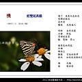 孫金星攝影作品_29.jpg