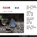 孫金星攝影作品_33.jpg