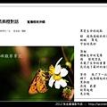 孫金星攝影作品_38.jpg